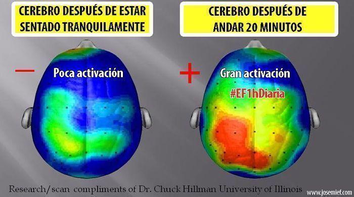 Mejora-cerebro-EF1hDiaria-Josemi